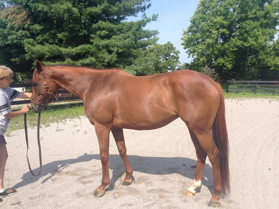 Bit of Heaven – Stunning Thoroughbred Mare For Sale
