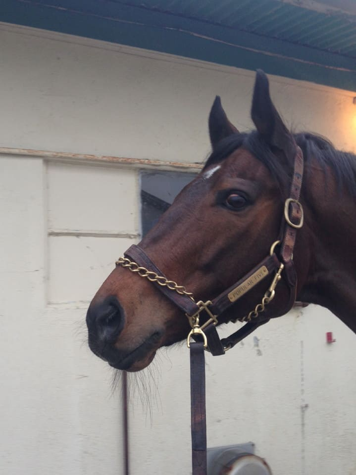 Deep Dive - Thoroughbred Gelding For Sale