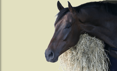 Thoroughbred horses for sale from the track