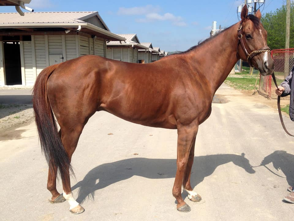 Beat the Storm - Thoroughbred horse for sale