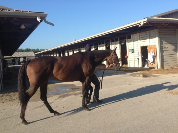 Curb Appeal - 16.1hh Thoroughbred Mare for Sale