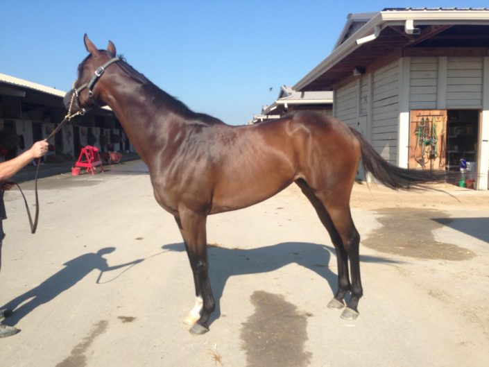 """Magic"" - Thoroughbred mare for sale from Bits & Bytes Farm"