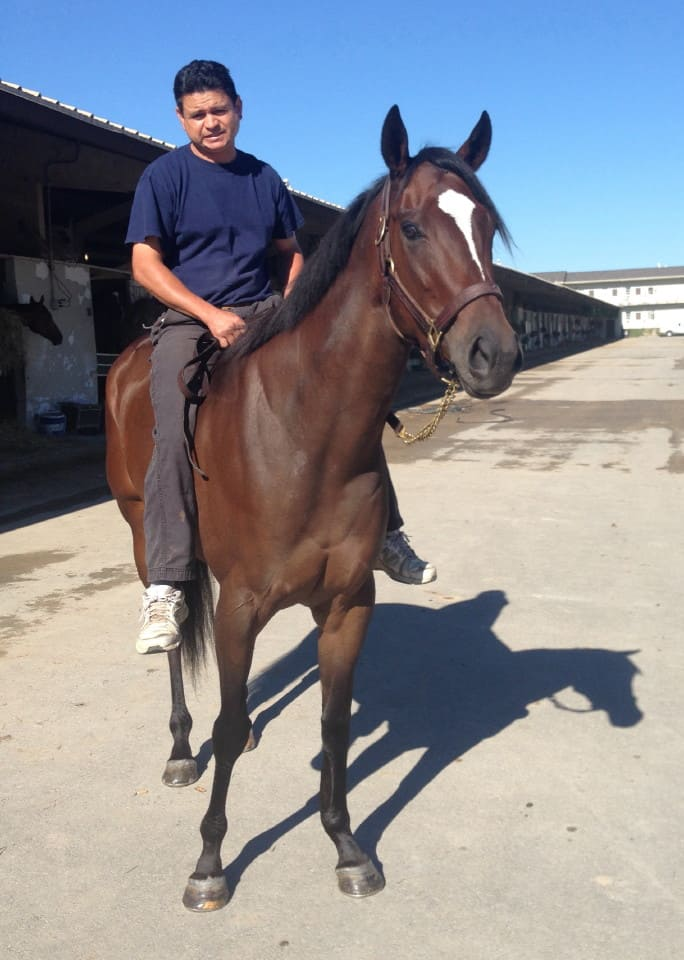 """Margarita"" - 2013 bay Thoroughbred Filly For Sale"