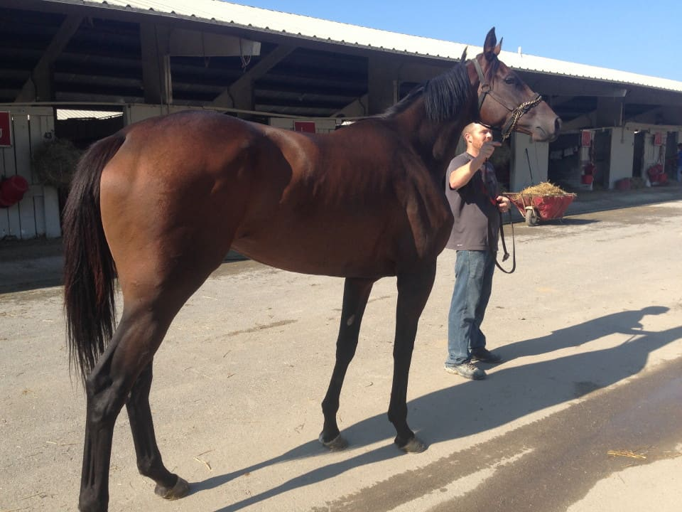 Prinzip Archives Thoroughbred Horses For Sale