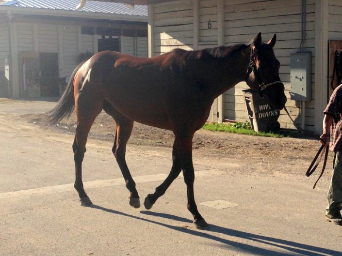 """""""Warrior"""" - Thoroughbred Horse For Sale"""