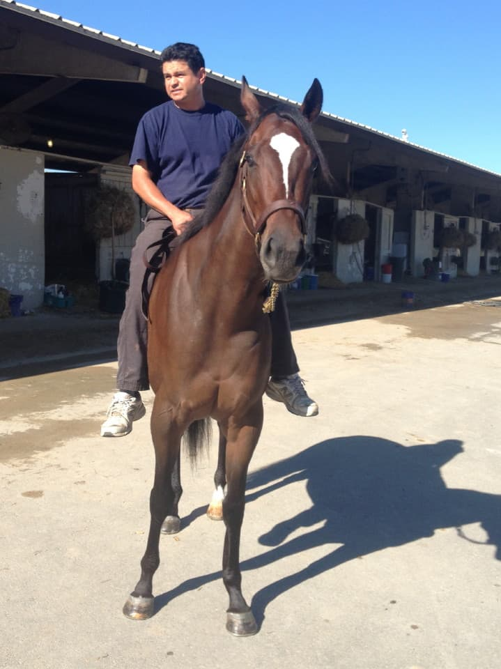 Margarita - Thoroughbred Mare For Sale