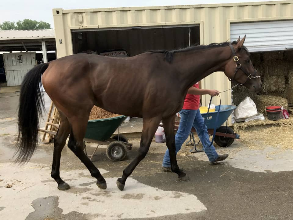 """Moose"" - 2013 Thoroughbred Horse For Sale"