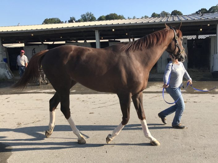 Ista One - Thoroughbred Horse For Sale - Arizona