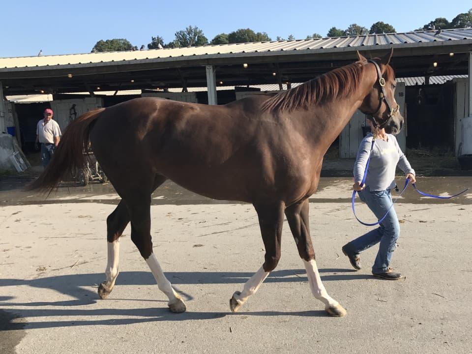Ista One - Thoroughbred Horse For Sale - Arizona