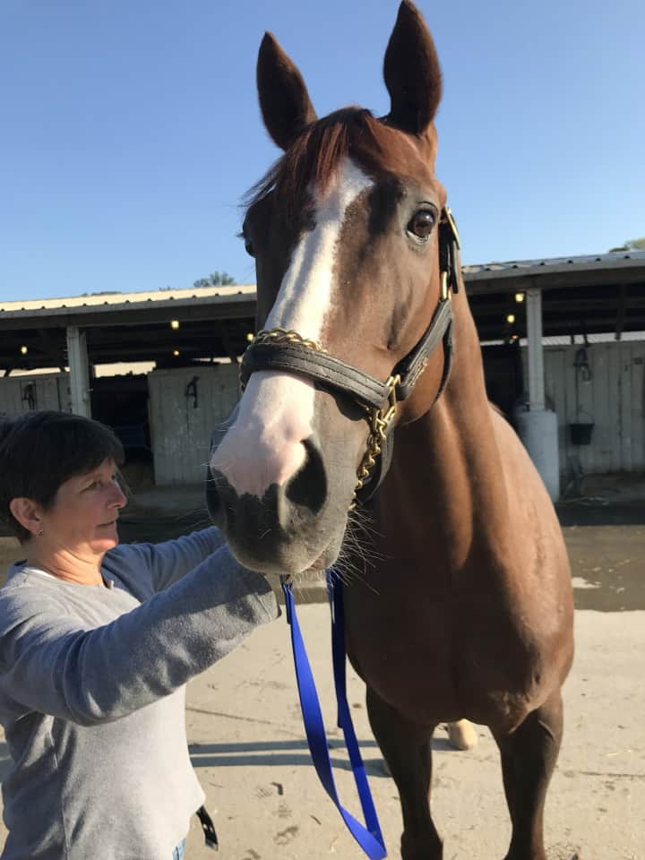 Ista One - Thoroughbred Horse For Sale - RRP Eligible
