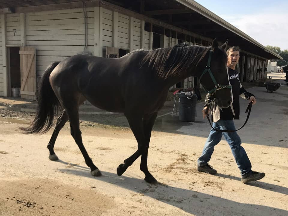 My Prize Black Thoroughbred Horse For Sale Bits Bytes Farm 20170920 017