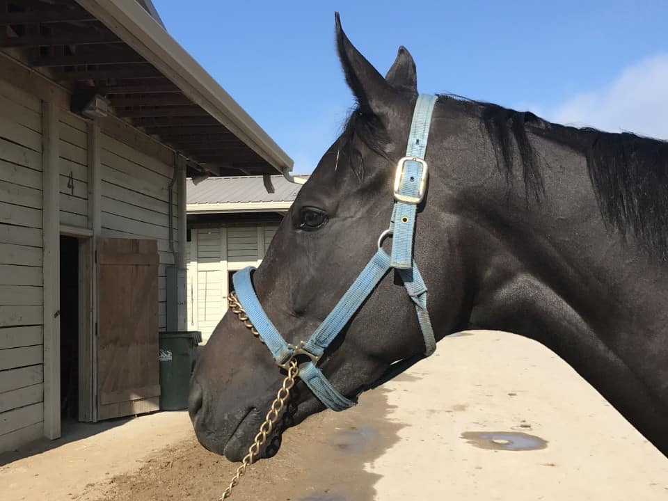 Vhaar She Goes Thoroughbred Mare For Sale 20170915 014