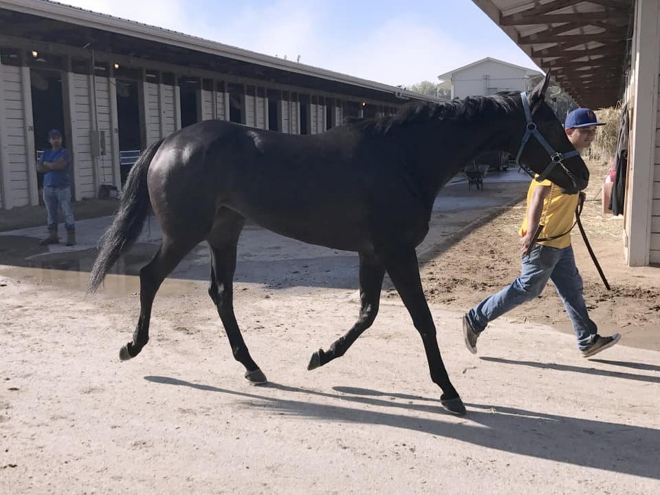 Vhaar She Goes Thoroughbred Mare For Sale 20170915 021