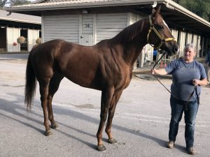 Star - Thoroughbred Mare For Sale - Bits & Bytes Farm