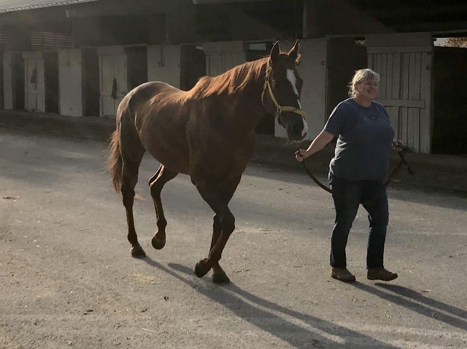 Star - Thoroughbred Horse For Sale - bits & Bytes Farm
