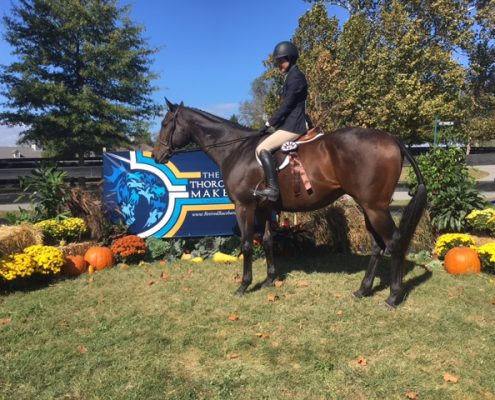 Tiz A Flyer 16.3 Hand Thoroughbred Gelding For Sale Bitsandbytesfarm 003