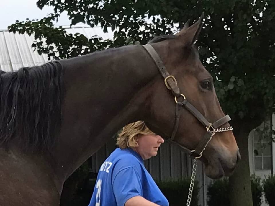 Outlaw Thoroughbred Horse For Sale 20171012 031h