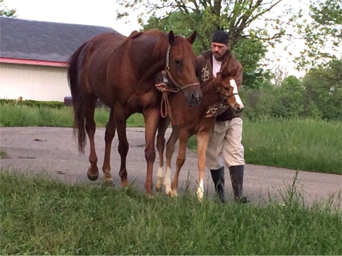 Runaway Beauty Thoroughbred Mare For Sale 2018