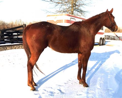 Runaway Beauty Thoroughbred mare for sale