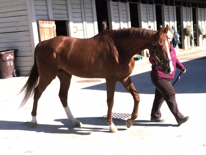 Thoroughbred Horse For Sale from Bits & Bytes Farm