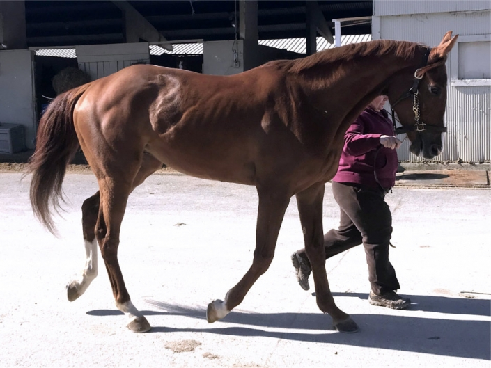 """""""The Pie"""" - Thoroughbred horse for sale"""