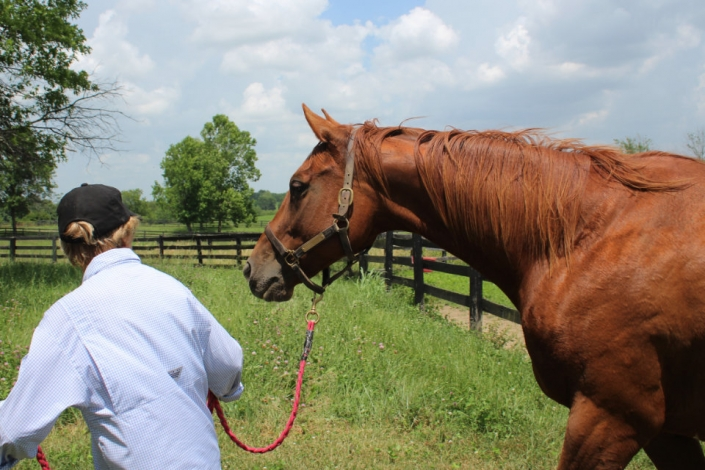 Runaway Beauty - Thoroughbred Mare For Sale