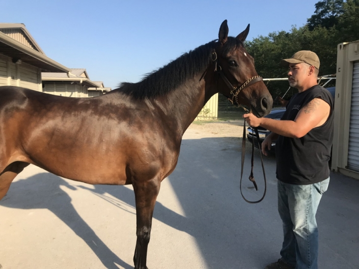 moon a thoroughbred horse for sale 20180713 002