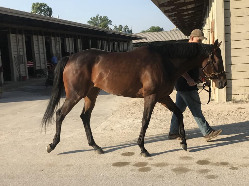 moon a thoroughbred horse for sale 20180713 046