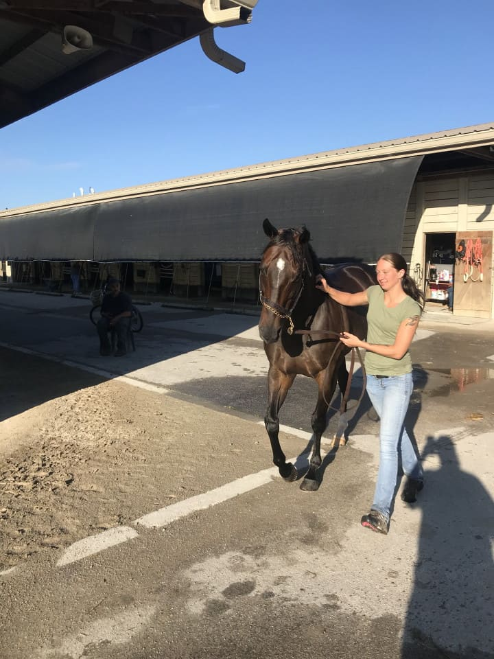 Swear thoroughbred horse for sale 20180727 030 1
