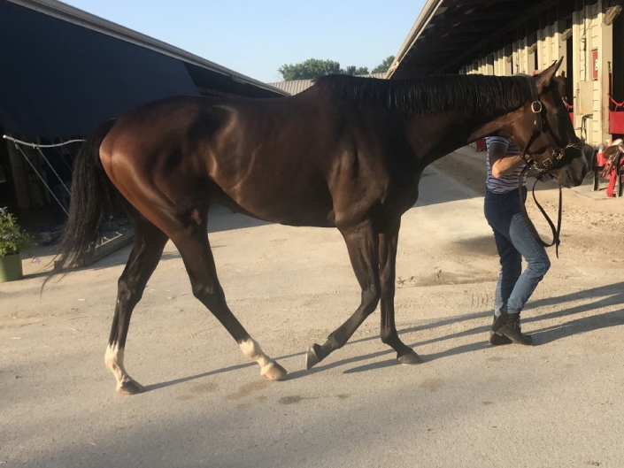 Brilliant Destiny is a 2015 Thoroughbred filly for sale