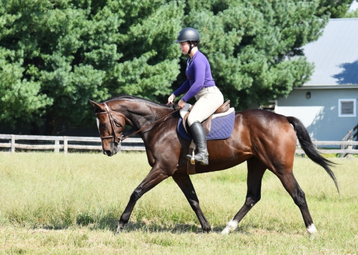 Brilliant Destiny - RRP Eligible Thoroughbred Mare For Sale