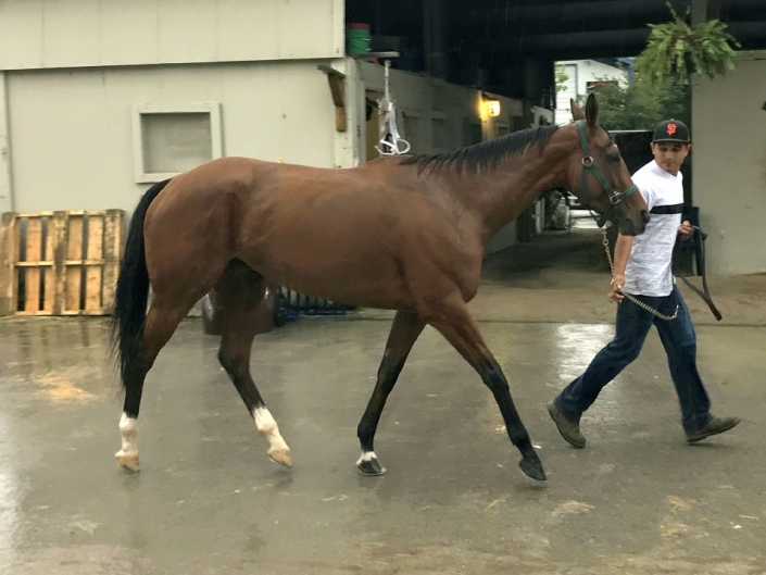 Ranhandle Justice - Thoroughbred Mare For Sale