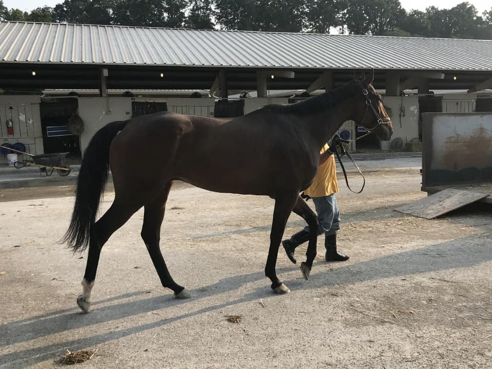 Smarty Kitten - 16.2 hand Thoroughbred Gelding For Sale From Bits & Bytes Farm