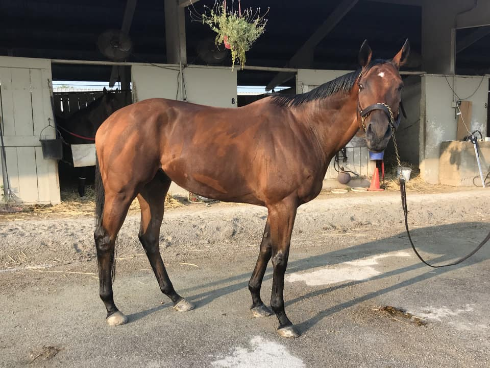 Validated Blarney - Thoroughbred Gelding For Sale - Bits & Bytes Farm