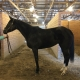 Made In Her Image - Thoroughbred Horse For Sale