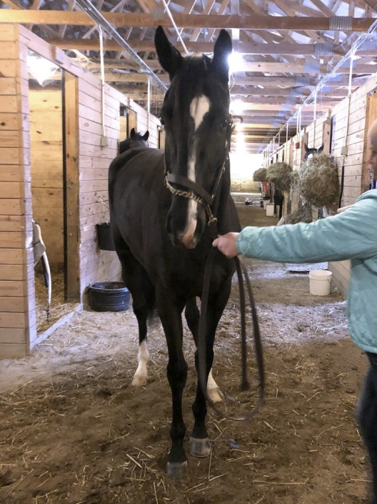 Made In Her Image Thoroughbred Horse For Sale 20181213 03