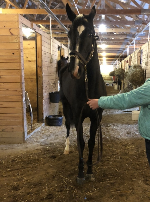 Made In Her Image Thoroughbred Horse For Sale 20181213 04