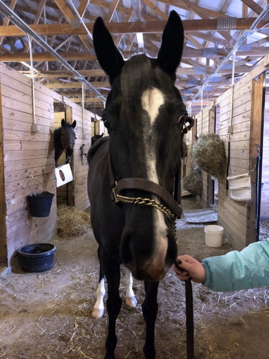 Made In Her Image Thoroughbred Horse For Sale 20181213 05