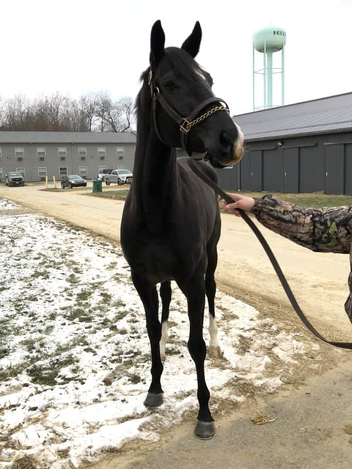 Made In Her Image Thoroughbred Horse For Sale 20181213 14