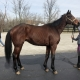 Safe Passage - Thoroughbred Horse For Sale - Bits & Bytes Farm