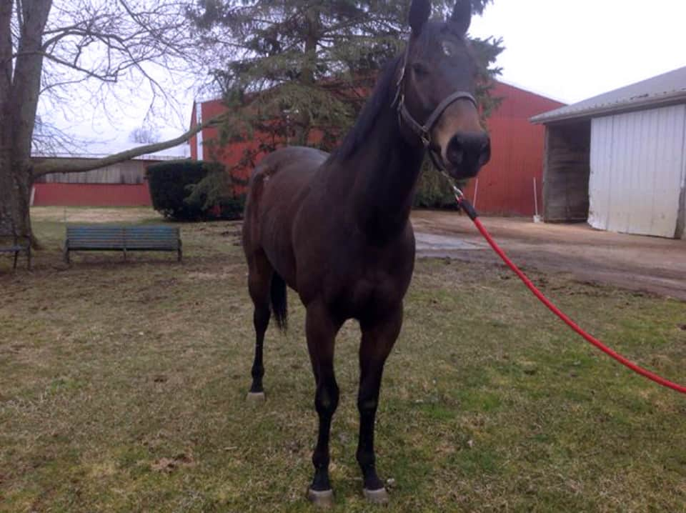 Dazzling Deputy - Thoroughbred Horse For Sale - Bits & Bytes Farm
