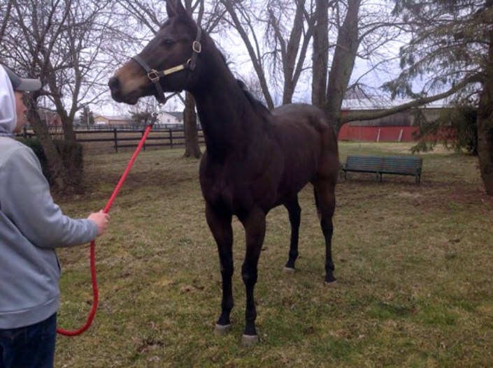 Dazzling Deputy - Thoroughbred Horse For Sale - Bits & Bytes Farm