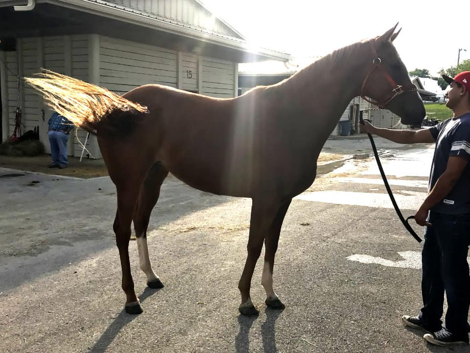 Exploding Lucy - Thoroughbred Mare For Sale
