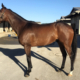 Hong Kong Gardens - Thoroughbred Horse For Sale