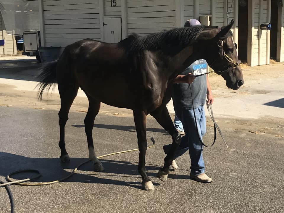 olympic mood thoroughbred for sale 20190626 011