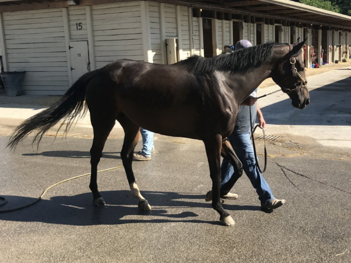 olympic mood thoroughbred for sale 20190626 012
