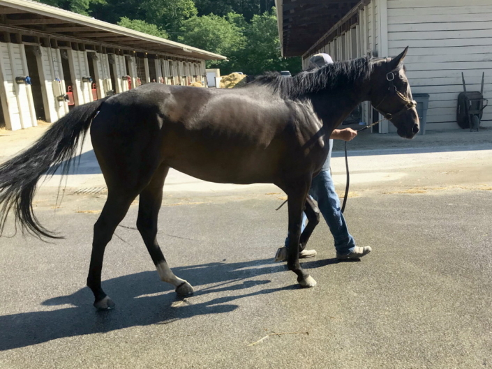 olympic mood thoroughbred for sale 20190626 013