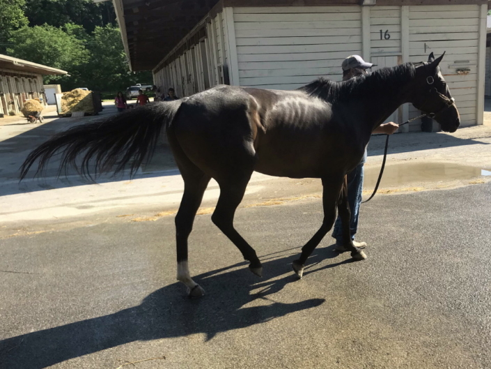 olympic mood thoroughbred for sale 20190626 014