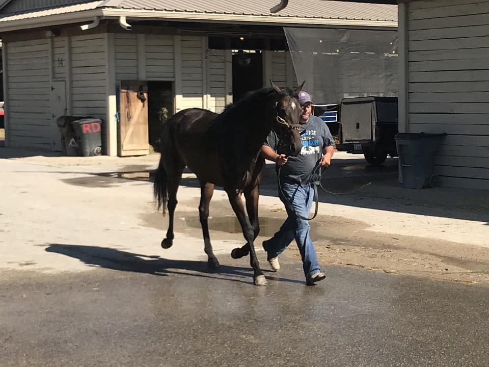 olympic mood thoroughbred for sale 20190626 015