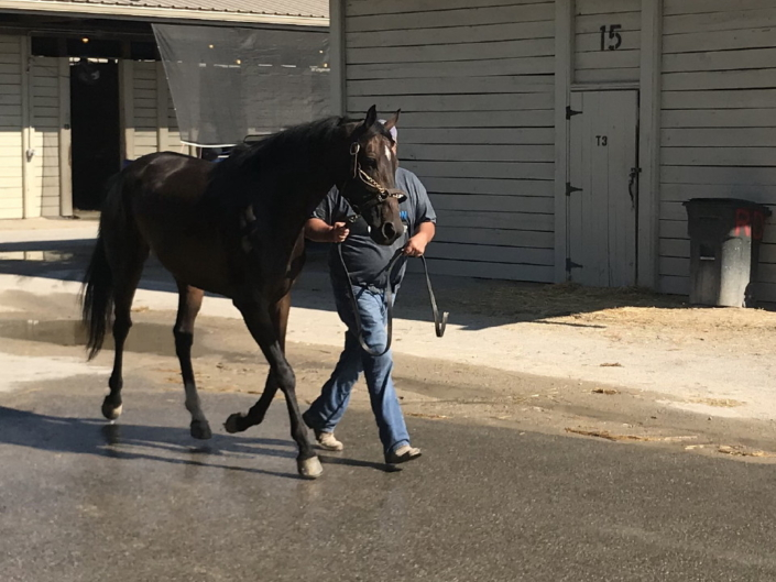 olympic mood thoroughbred for sale 20190626 018